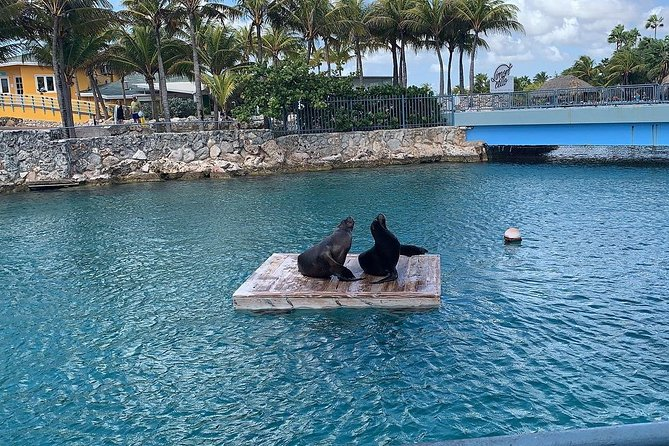 Curacao Island and Sea Aquarium Tour