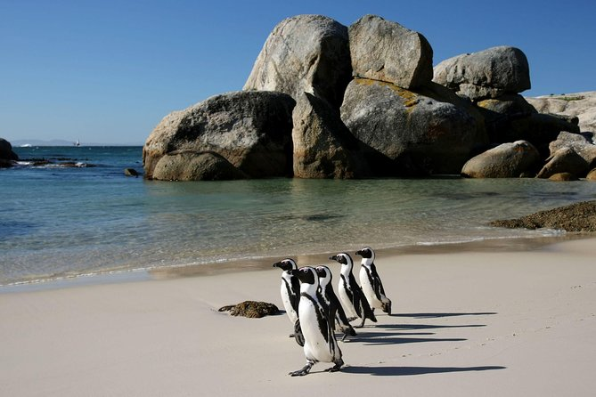 Penguin Encounter Boulders Beach Half Tour Day from Cape Town
