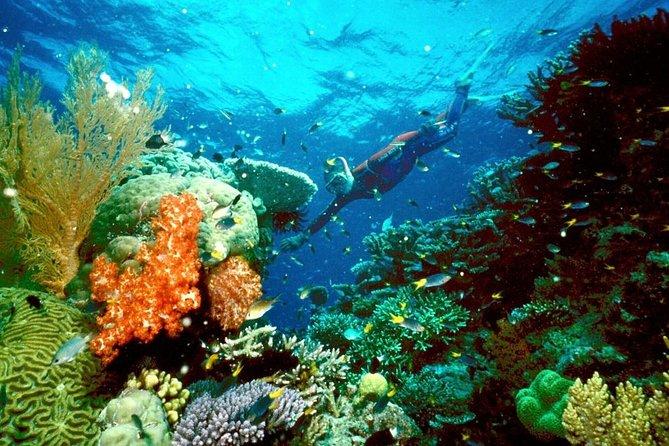 Snorkel giftun island in hurghada