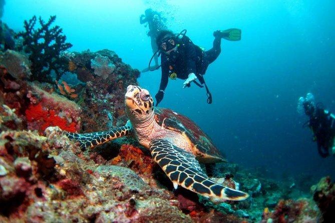 Anilao Diving Tour From Manila (Private Tour)