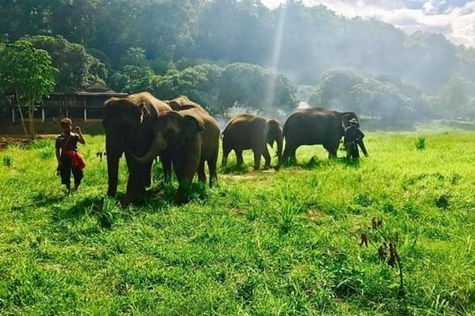 Chiang Mai Elephant Sanctuary Small Group Ethical Tour photo 1