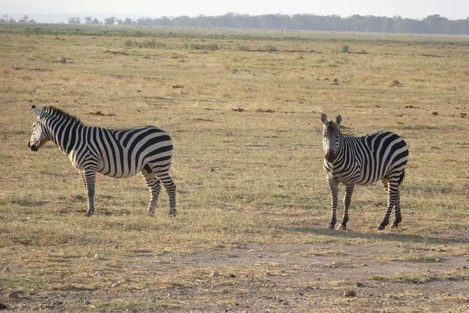 4 Days Mombasa Safari – Tsavo West, Amboseli & Tsavo East National Parks photo 3