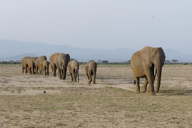 4 Days Mombasa Safari – Tsavo West, Amboseli & Tsavo East National Parks photo 23