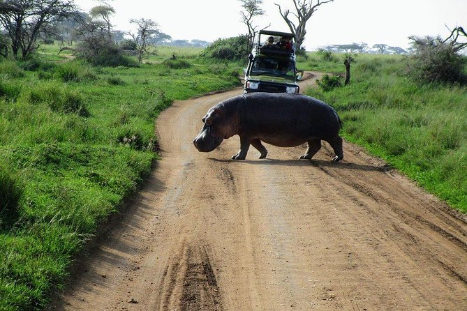 3 Days Nairobi, Tsavo West, Amboseli Safari photo 12