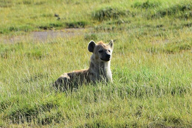 3 Days Nairobi, Tsavo West, Amboseli Safari photo 17
