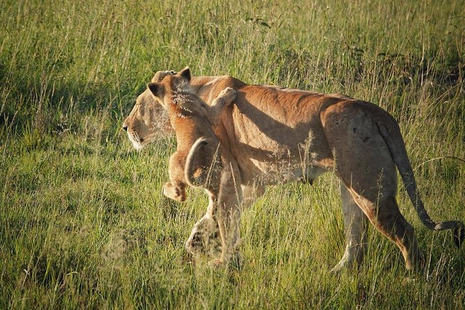 3 Days Nairobi, Tsavo West, Amboseli Safari photo 15
