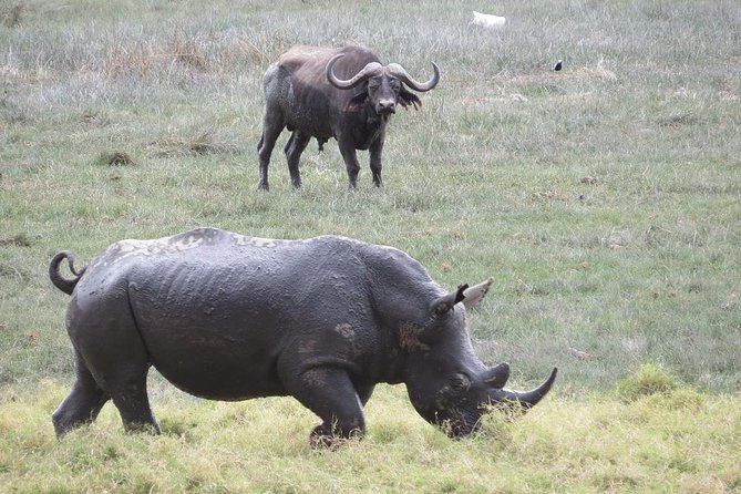 3 Days Nairobi, Tsavo West, Amboseli Safari photo 2