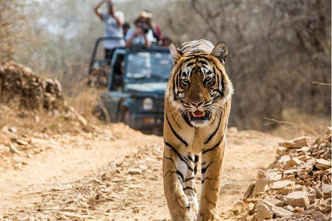 7 Night / 8 Days The Golden Triangle Tour with Tiger