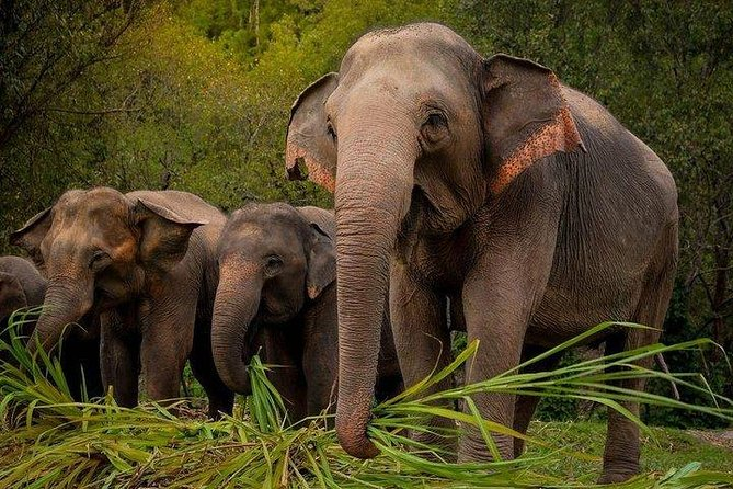 From Bangkok: Elephant Jungle Sanctuary Day Trip