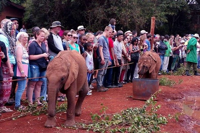 Giraffe Center,Elephant Orphanage,Karen Blixen&Bomas of Kenya