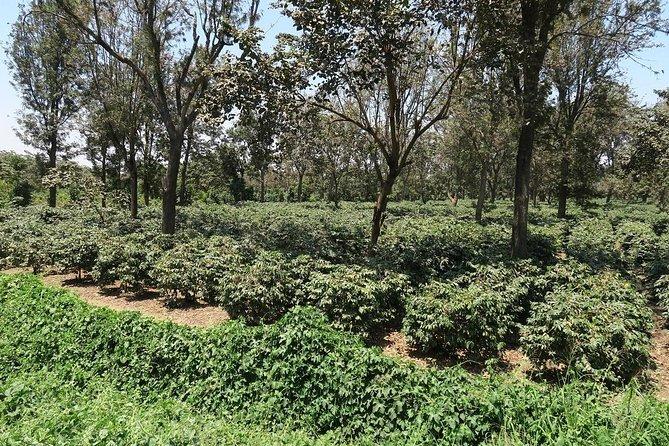 Visit Arusha Coffee Plantation Day Tour
