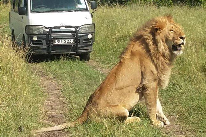 3 days Masai Mara wildebeest Migration Budget Safari