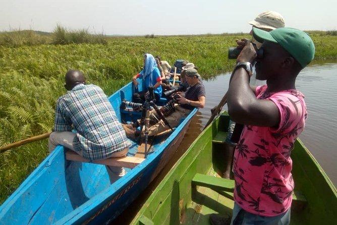 Mabamba Shoebill Stork Tracking Tour