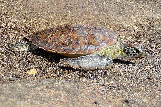 Sea Turtle Experience