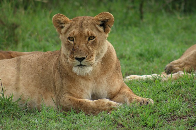 Masai Mara/ Lake Naivasha/ Nairobi 7 Days 6 Nights Luxury Safari Package