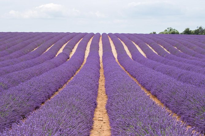 Provence & Lavender Tour