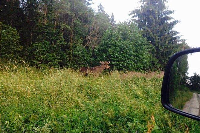 Evening Wildlife Safari from Stockholm