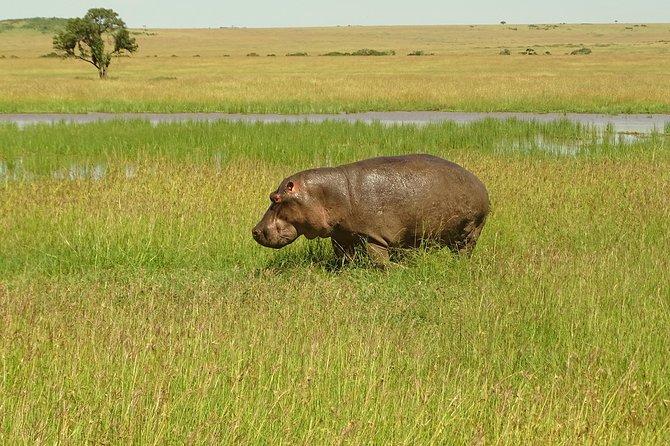 3 Day Maasai Mara Safari ( Small group - Max 6)