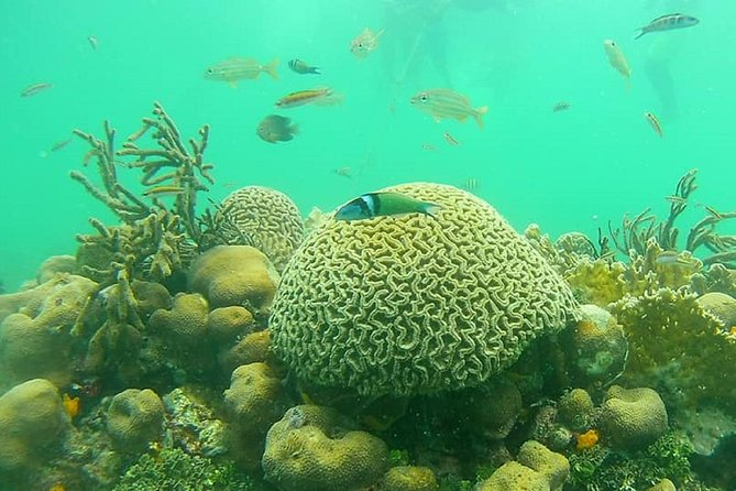 Snorkel Fly with Lunch and FREE Underwater Pictures