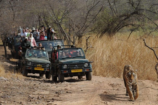 Private Ranthambore Wildlife Safari Tour from Jaipur