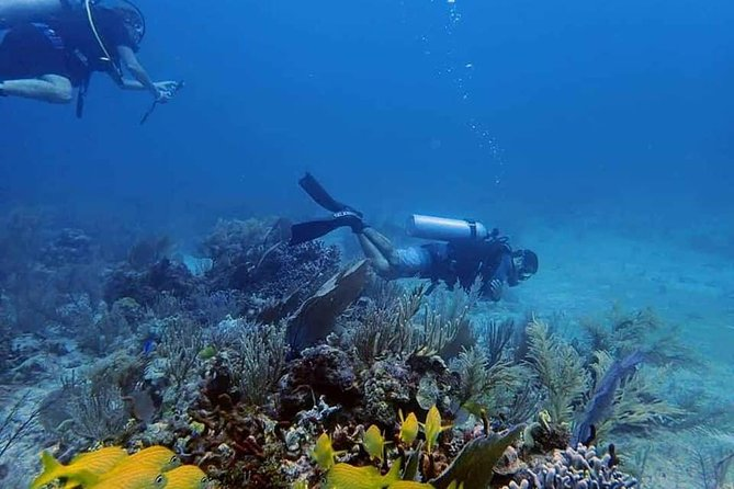 Local Reef Experience -Certified Diver