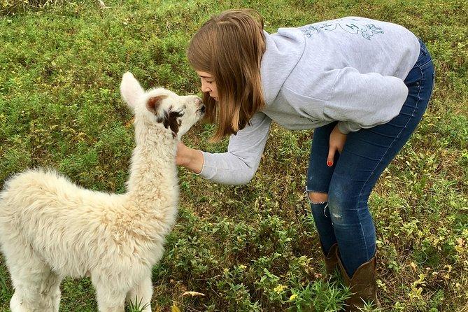 Llama/Alpaca Hike and Farm Tour