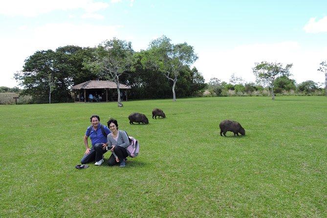 Ibera Safari