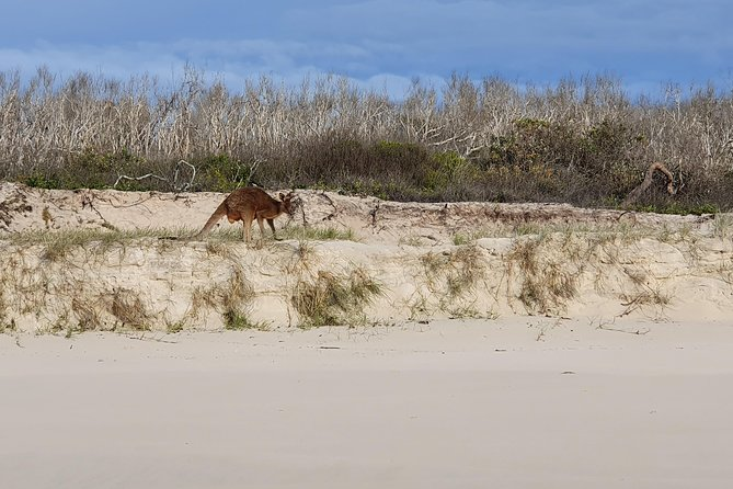 Bribie Island Beach & Bunker Tour photo 2