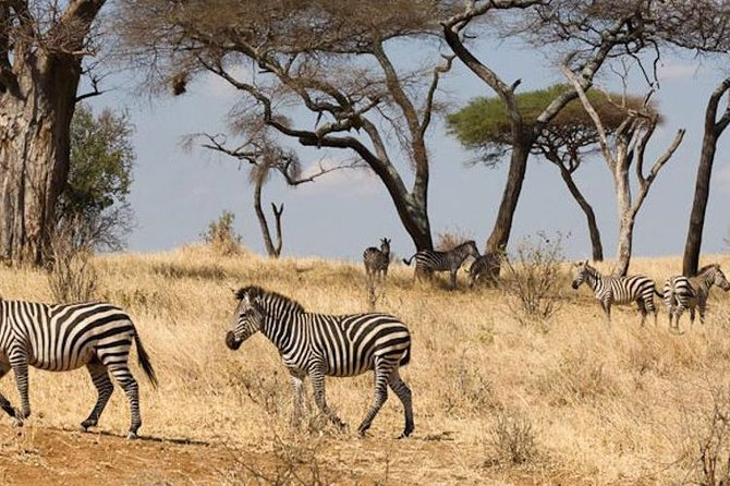 5 Days Tanzania Safari