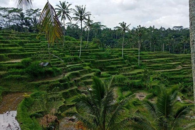 4 Hours Ancient Village & Cultural Landscape of Bali Trek