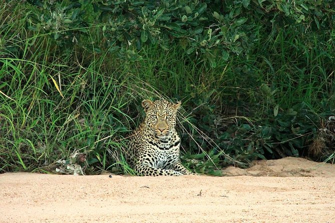 Kruger National Park Full Day Safari Tour photo 14