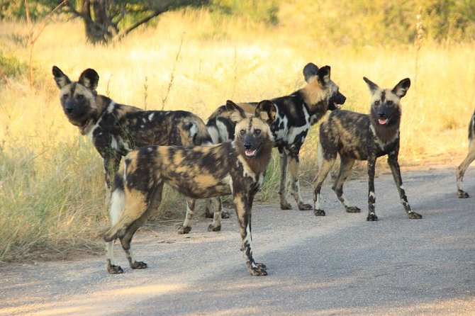 Kruger National Park Full Day Safari Tour photo 17