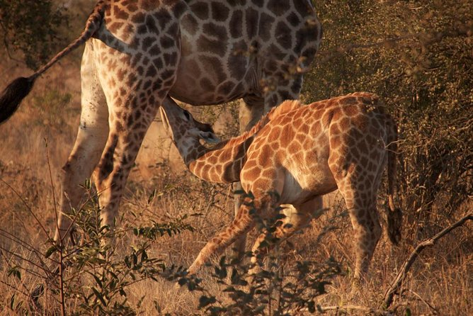 Kruger National Park Full Day Safari Tour photo 9