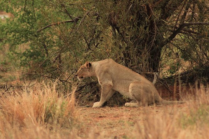 Kruger National Park Full Day Safari Tour photo 16