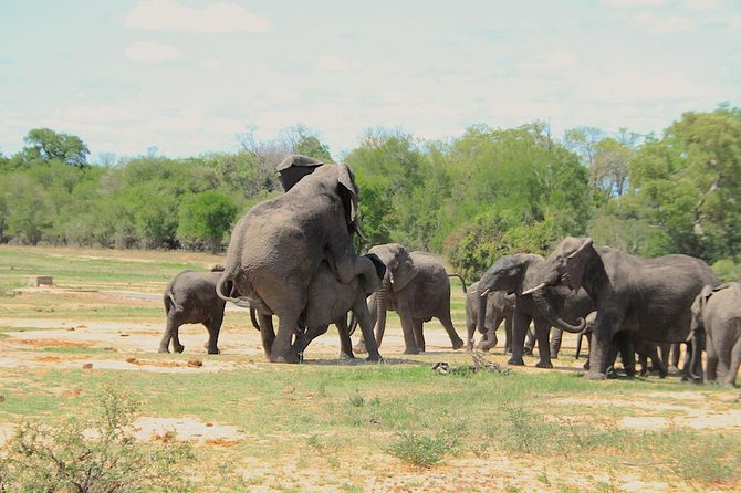 Kruger National Park Full Day Safari Tour photo 15