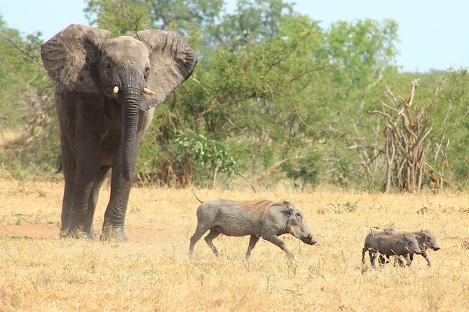 Kruger National Park Full Day Safari Tour photo 23