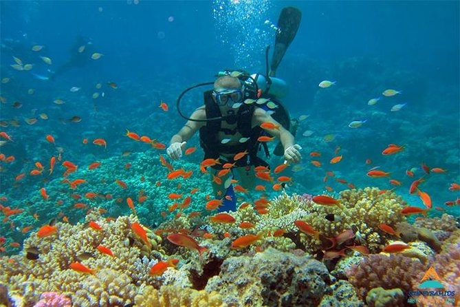 Snorkeling at Mahmya Island from Hurghada