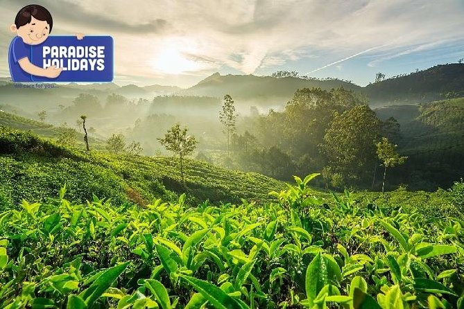 3N4D Munnar Alleppey (Given cost is applicable if there is 02 Adults above)