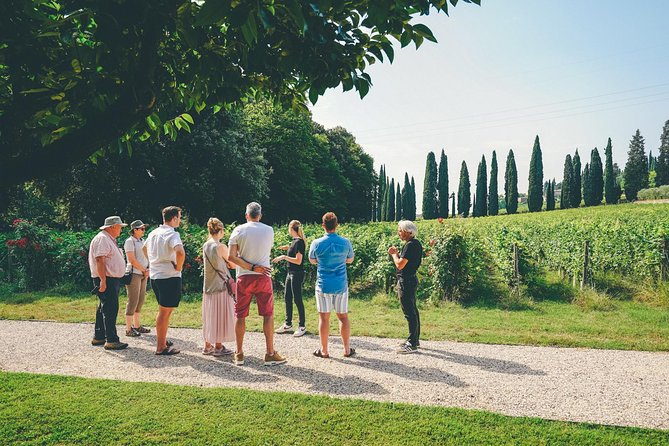 Amarone Wine-tasting Tour from Verona