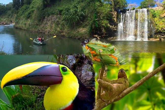 Private Sloth Encounter Waterfall And Corobici Floating Tour