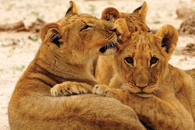 Hwange National Park Full Day Game Drive Safari