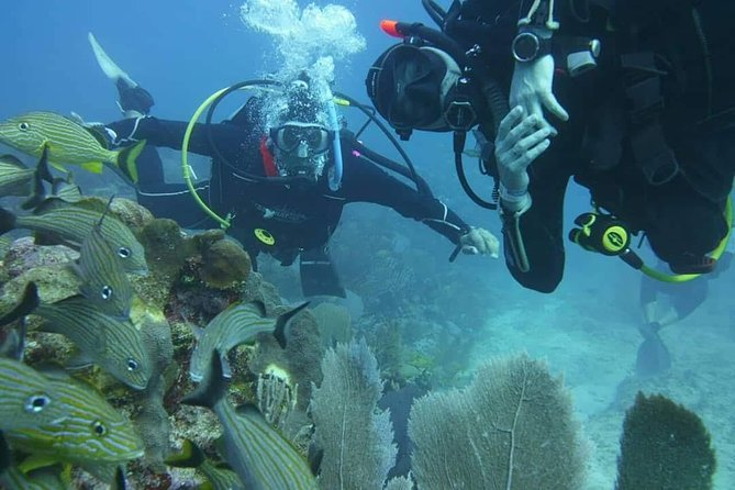 Discovery Scuba Diving !!