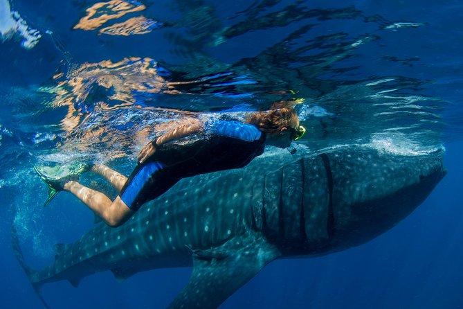 A Lifetime Experience: Whale Shark Snorkeling Tour