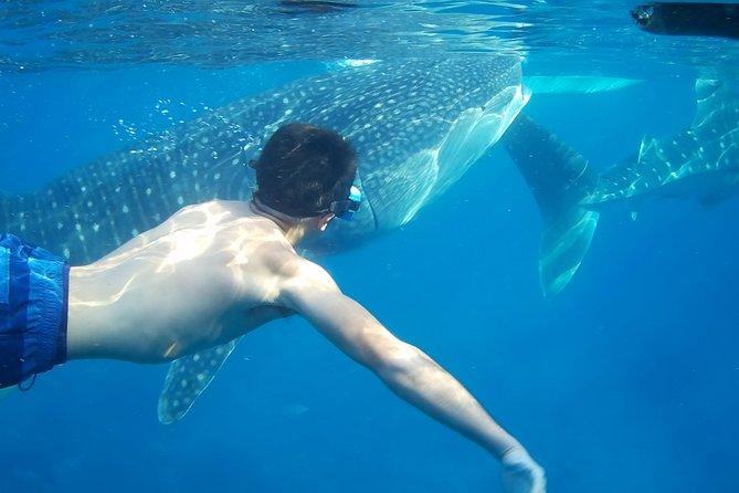 7 Days, Best of Outdoor Adventures in Cebu, Philippines
