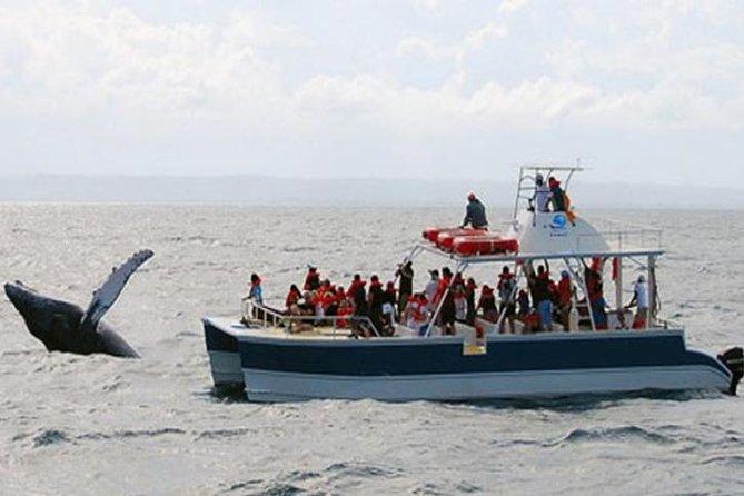 Samaná Whale Watching Excursie vanuit Punta Cana