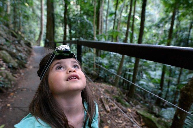 Excursión de un día al bosque tropical y cascada de Springbrook National Park desde Brisbane