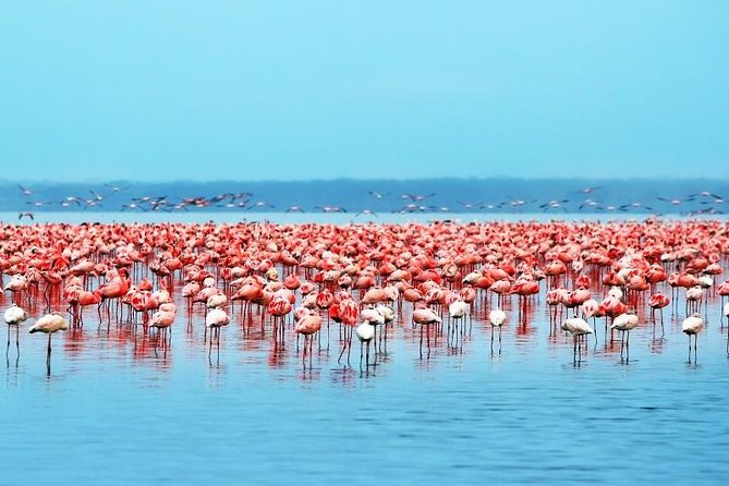 Nairobi to Lake Nakuru national park Day tour