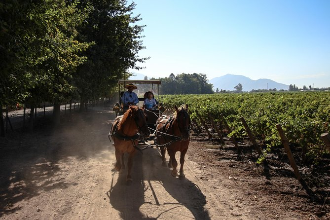 Viu Manent and Lapostolle Wineries - Colchagua Valley
