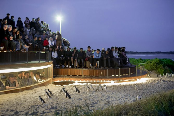 Small-Group Phillip Island Penguin Tour from Melbourne