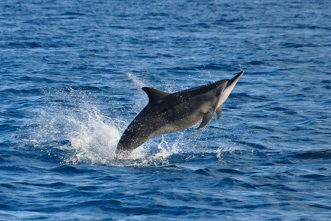 Dolfijnen ontmoeten en BBQ op het eiland Benitiers